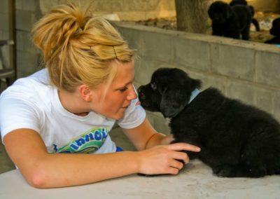 newfoundland-puppies-nampa-idaho