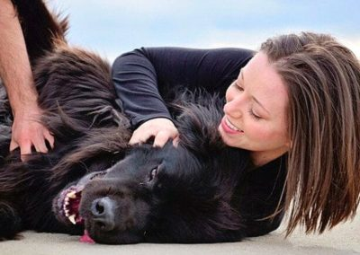 wilbur-the-newfoundland-dog