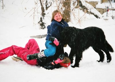 newfoundland-puppies-dogs13620038