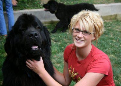 newfoundland-puppies-dogsIMG_0387
