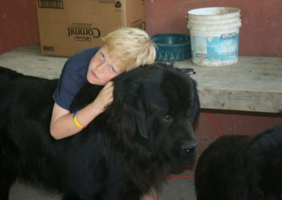 newfoundland-puppies-dogsIMG_0433