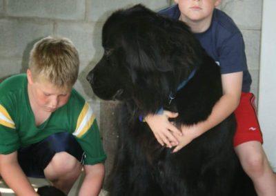 newfoundland-puppies-dogsIMG_0443