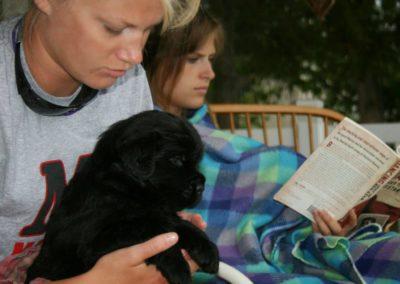 newfoundland-puppies-dogsIMG_0460