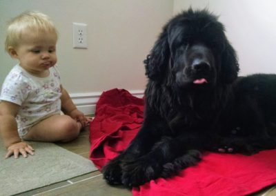 Baby with young Newfie