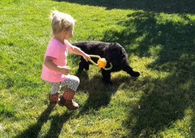 Child with Newfie