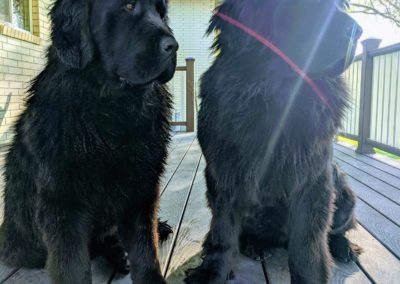 Black Newfies Outdoors